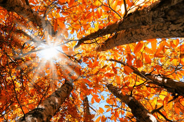 Sonbaharın Güzelliğini Bu Mekanlarda Yaşayın - 1