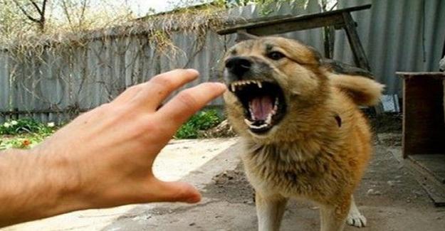 Köpek Saldırısına Karşı Neler Yapmalıyız? - 1