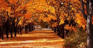 Sonbaharın Güzelliğini Bu Mekanlarda Yaşayın