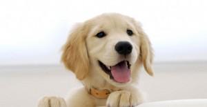Ölmek Üzereyken Bulunan Köpeklerin Şaşırtan Değişimi!