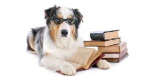 Evcil Hayvanınıza Bu Yöntemlerle Eğitim Verebilirsiniz!