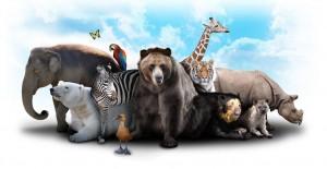 Nesli Tükenmekte Olan Hayvanlar!