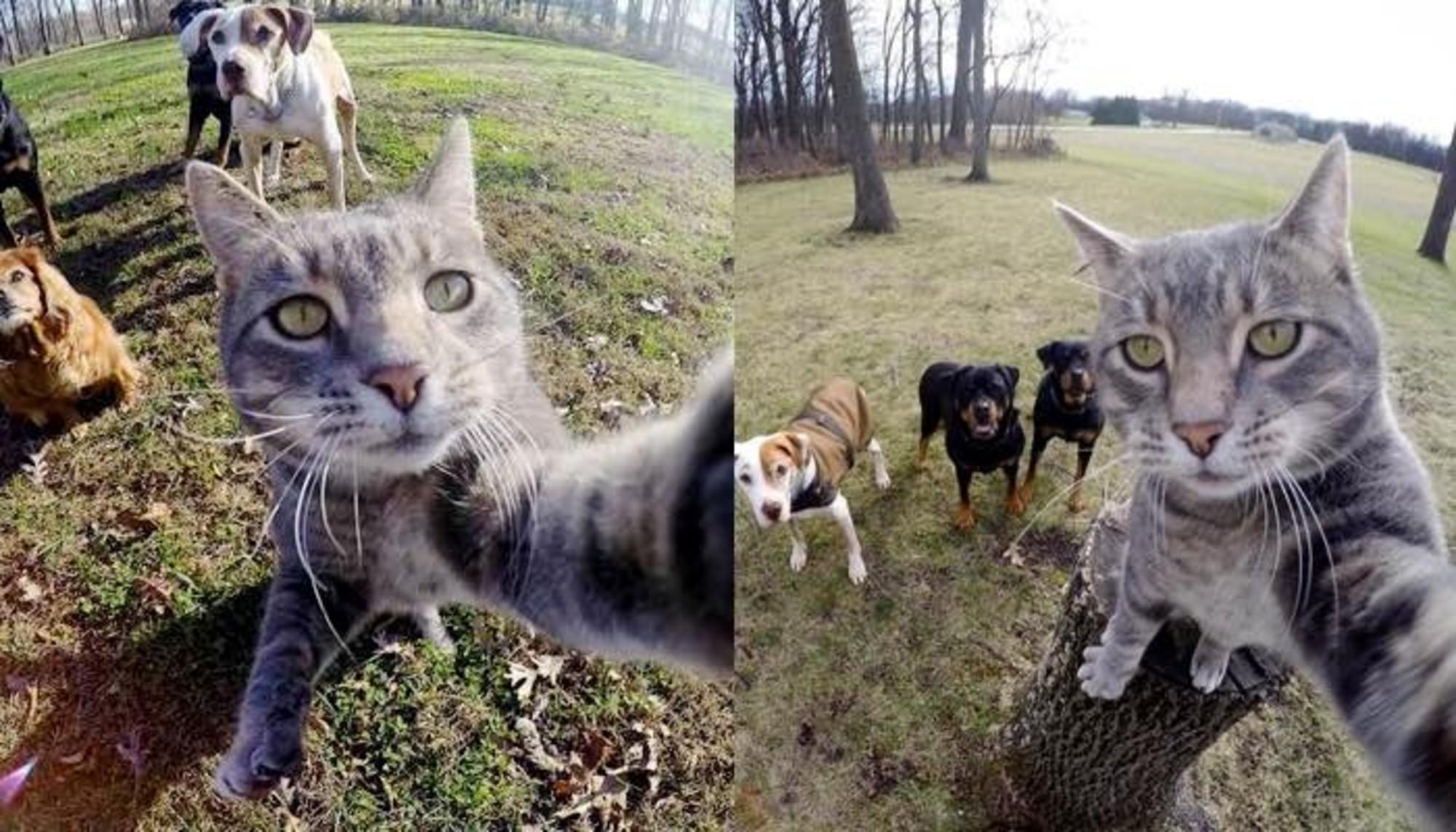 Yetenekli Kedi Manny'den Selfie Kareleri - 1