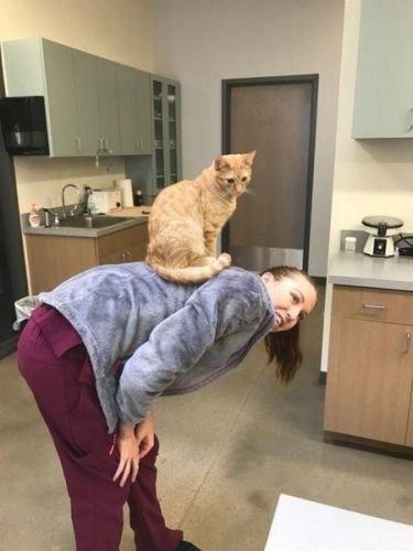 Tedavi Öncesi Korkan Hayvanları Sakinleştiren Hemşire Kedi! - 1