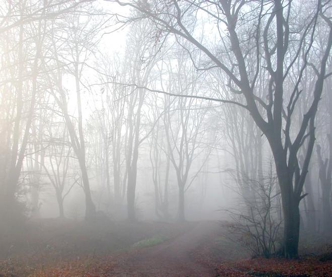 Bu Ormanlara Girmek Cesaret İster! - 1
