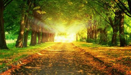 Cennette Hayata Dair Bilinmeyen 7 Madde