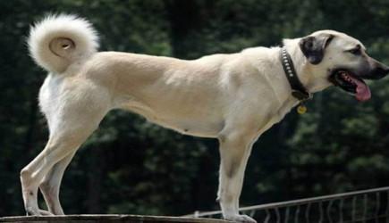 Veteriner Köpeğin Derisinden Yüzlerce Canlı Kurdu Tek Hamlede Çıkardı!