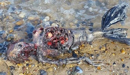 Deniz Kızı Cesedi Gerçek mi?