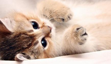 İslam Dininde Kedinin Şaşırtıcı Yeri!