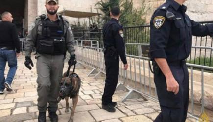 İsrail Köpekleri Mescid-i Aksa Bahçesinde!