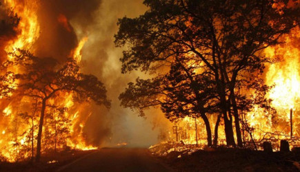 Mersin'de Korkutan Yangın! Orman Kül Oldu
