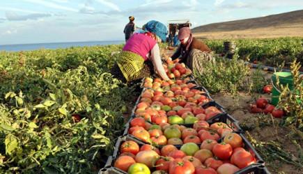 Ucuz Gıda İçin Vergi Hamlesi Atıldı!