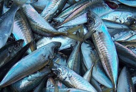 Av Yasağı Balık Fiyatlarını Uçurdu