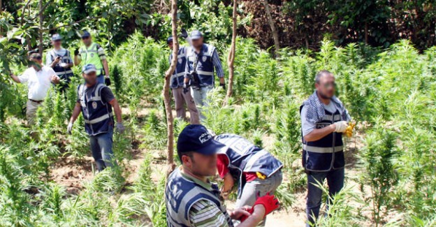 Diyarbakır'da 2 Ton Uyuşturucu Ele Geçirildi