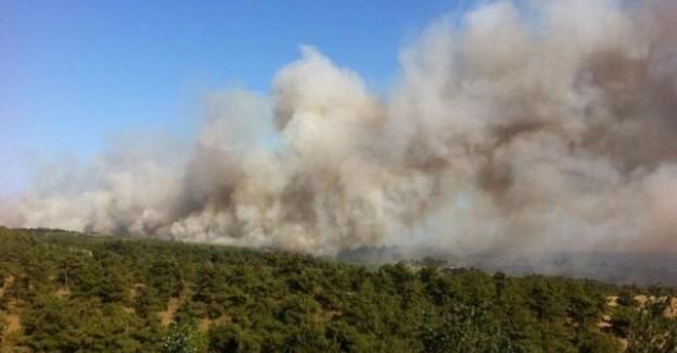 Kartal Cezaevi Ormanında Yangın