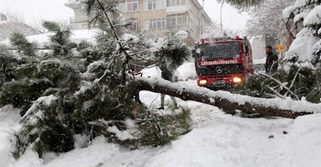 Yoğun Kar Yağışı İstanbul'da Ağaçları Devirdi