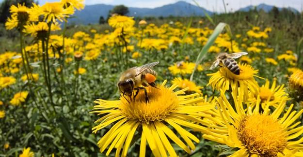 Arı Sokmasına Karşı Alınacak Önlemler!