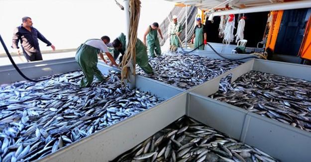 Balıkçılar Müjde! Yarın Yasak Kalkıyor!