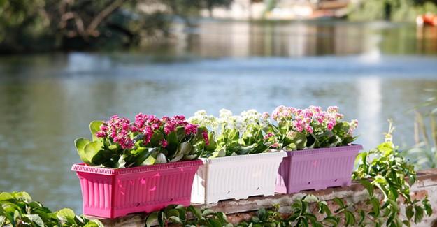 Balkon ve Bahçe Çiçeklerinin Bakımı Nasıl Olmalıdır?
