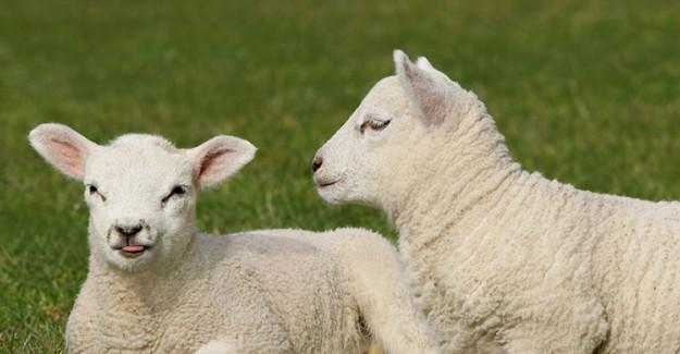 Bu Hayvanların Etleri Duruma Göre Haram Sayılıyor
