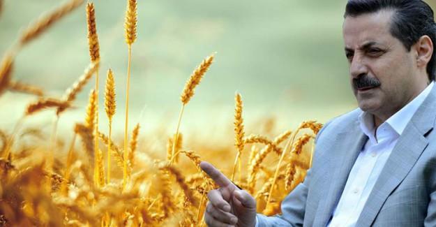 Buğday Alım Fiyatları Açıklandı!