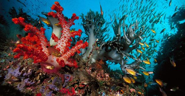 Denizde Yetişen Bitkilerin Sağlığa Öyle Bir Faydası Ortaya Çıktı ki!