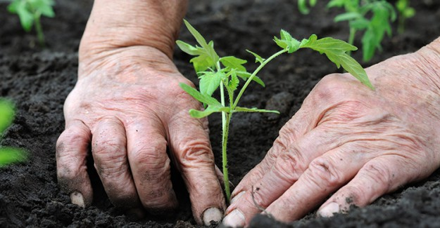 Evde Bitki Yetiştirmek İsteyenlere Altın Değerinde Tavsiyeler!
