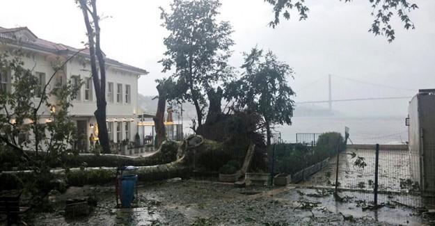 Fırtına Asırlık Çınar Ağacını Devirdi