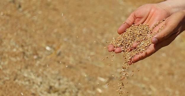 Gümrük Vergisinin Düşürülmesi Buğdayın da Fiyatını Düşürdü!