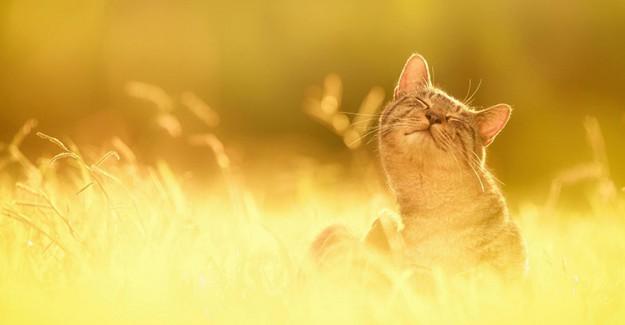 Güneş Çarpmasını Hafifleten Mucizevi Besinler!