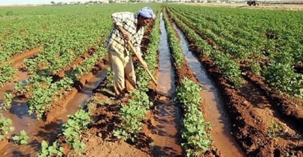 Hükümet Açıkladı: Terörden Zarar Gören Çiftçilerin Borçları...