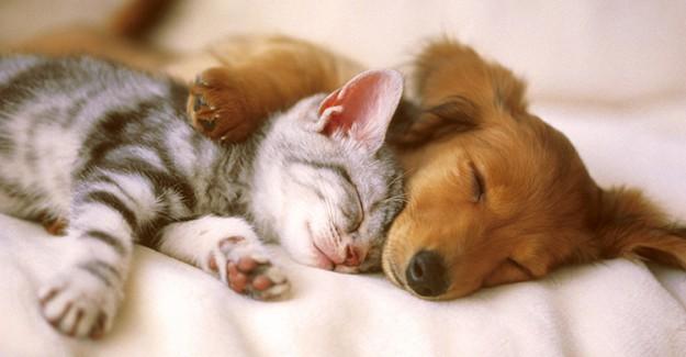 İslamiyet'te Hayvan Sevgisi Nasıldır?