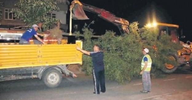 Yine CHP Yine Ağaç Katliamı!
