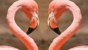 Flamingoların Van Gölü'ndeki Şöleni Görenleri Büyülüyor!