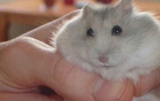 Sevimli Hamster Trip Attı