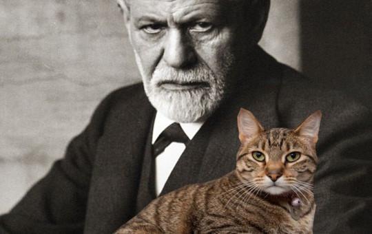 Kediyle Freud Tartıştı!