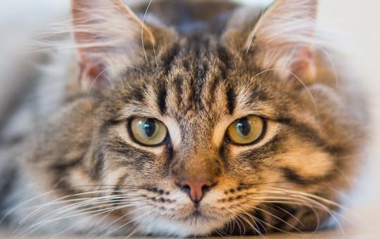 Abdest Alan Dayı Susayan Kediye Dayanamayıp Su İçirdi!