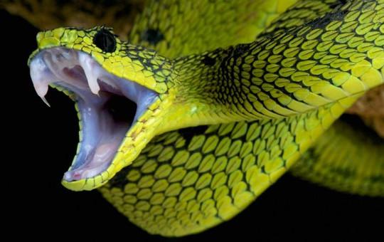 Yılanın Hayatını Kurtardı!