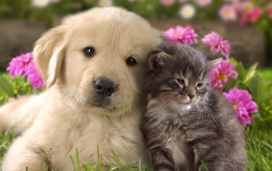 Kedi ile Köpek Arasındaki Farkları Gözler Önüne Serdi!