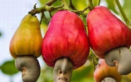 Birbirinden Tuhaf Meyve Ve Sebzelerin Nasıl Üretildiğini Görenler Hayrete Düştü!