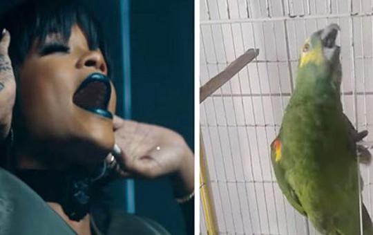Rihanna'nın Ses İkizi Papağan