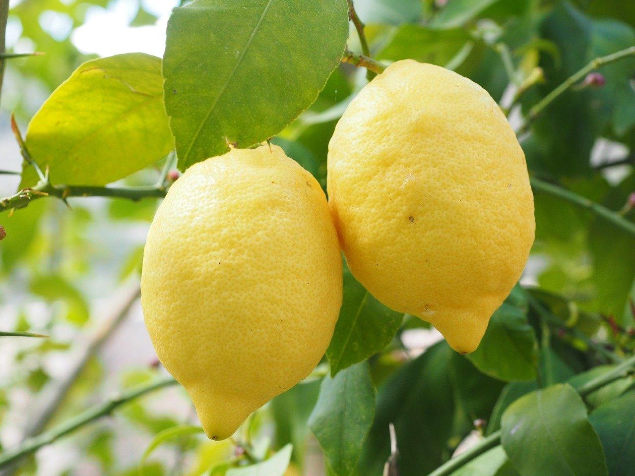 Limon ve Misket Limon arasındaki Fark Nedir? - 1