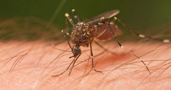 Sivrisinek Isırığı Sonrası Başına Gelenler Herkesi Hayrete Düşürdü - 1