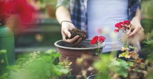 Eylül Ayında Bahçe Bitkilerinin Bakımı - 1