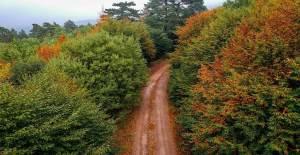 Domaniç Dağları'ndaki Sonbahar Güzelliği Büyüledi