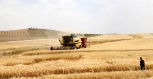 Güneydoğu'nun Tahıl Ambarında Hasat Bereketli Başladı