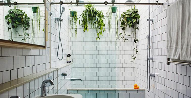 Banyoda Yetiştirilebilecek Bitkiler