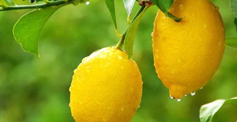 Limon Hamilelik Lekelerini Geçiriyor! - 1