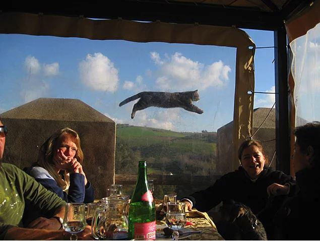 Fotoğraflardaki Şovu Çalıp Başrolü Kapan 15 Sevimli Kedi - 1
