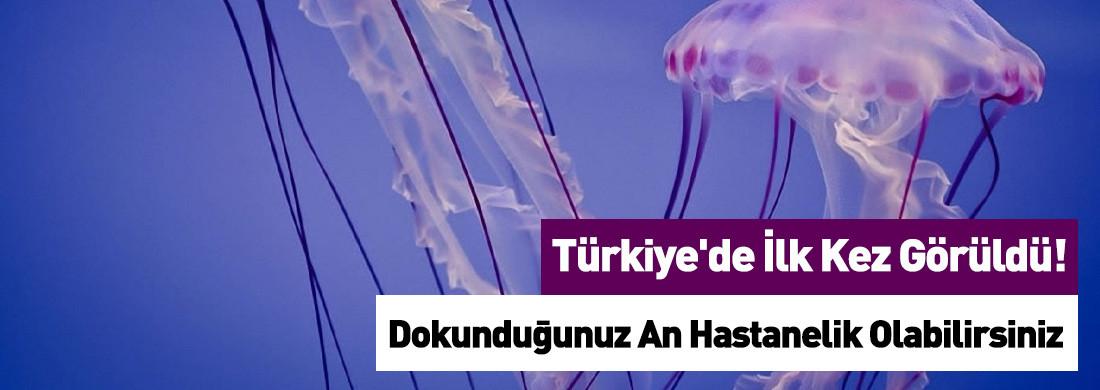 Antalya'da İnsan Tenini Yakan Denizanası İstilası Tespit Edildi
